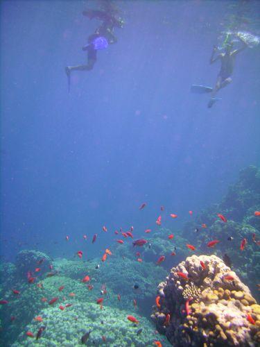 Zdjęcia: Ras Mohamed, zatoka Aqaba, pod wodą..., EGIPT