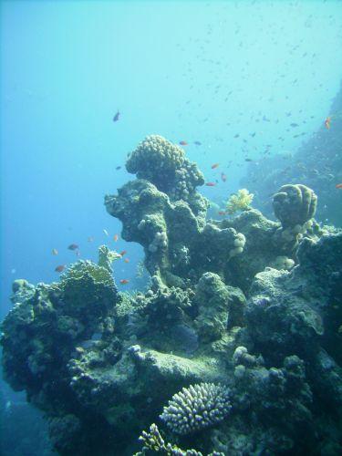 Zdjęcia: Ras Mohamed, zatoka Aqaba, koralowa formacja, EGIPT