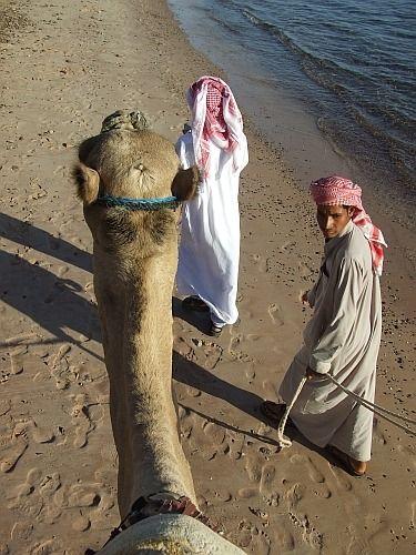 Zdjęcia: Taba, Półwysep Synaj, Widok z wielbłąda;), EGIPT