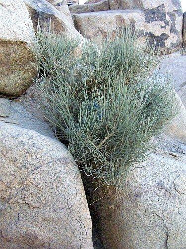 Zdjęcia: G. Mojżesza, Półwysep Synaj, Roślinność na Synaju, EGIPT