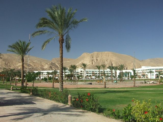 Zdj�cia: Taba, P�wysep Synaj, W�r�d egipskich palm, EGIPT