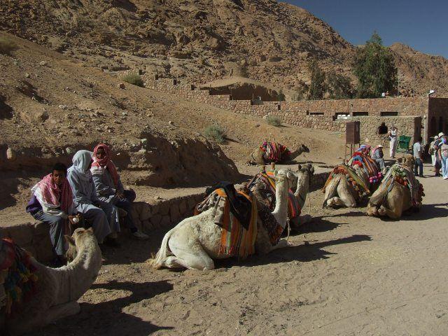 Zdj�cia: Klasztor �w. Katarzyny, P�wysep Synaj, Post�j camel�w, EGIPT