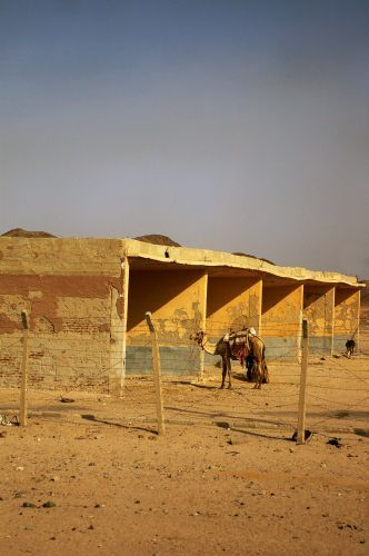 Zdjęcia: W drodze do Luxoru, Garaż na wielbłądy, EGIPT