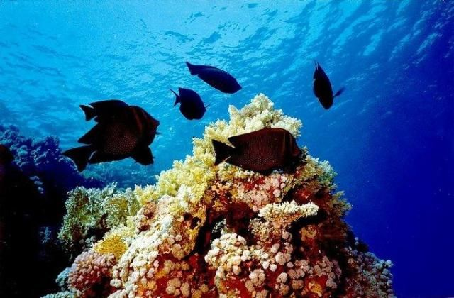 Zdjęcia: Hurghada, Red Sea, Inny swiat, EGIPT