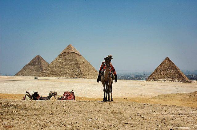 """Zdjęcia: Giza, Kair, """"wielbłąd na rykowisku:) """"czyli pocztówka z Egiptu, EGIPT"""