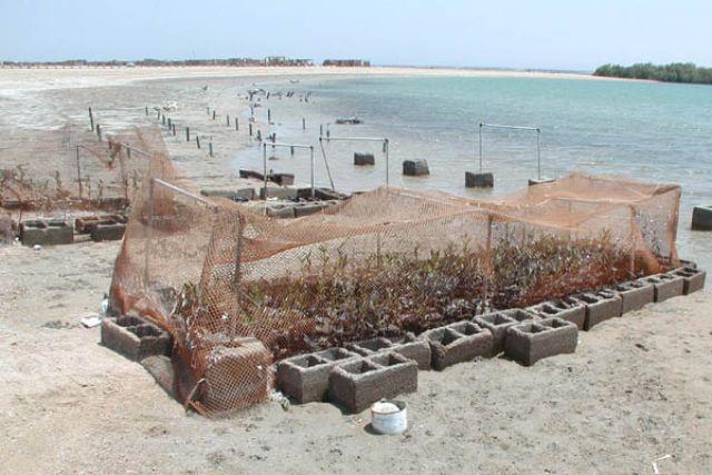 Zdjęcia: Sharm El Sheikh, Hodowla namorzynów, EGIPT