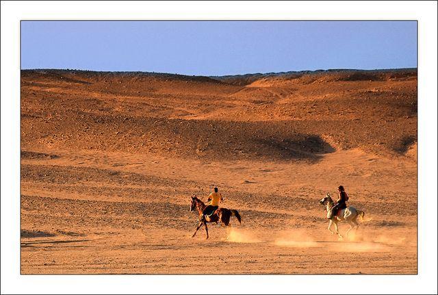 Zdjęcia: Pustynia Zachodnia, Galopem, EGIPT