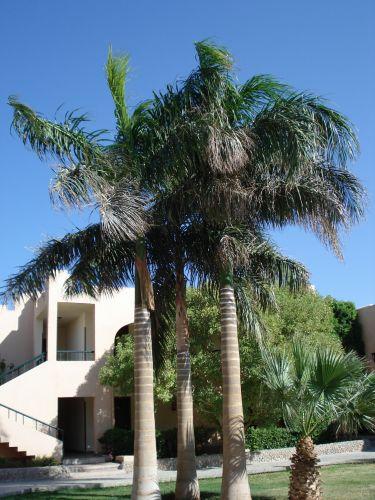 Zdjęcia: ogród, h, palmy, EGIPT