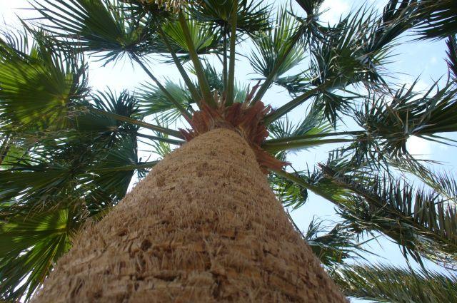 Zdjęcia: ogród, Hurgada, palma, EGIPT