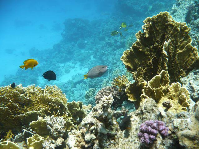 Zdjęcia: Hurghada, Morze Czerwone, Wesołe Rybki, EGIPT