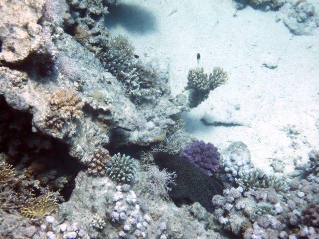 Zdjęcia: Hurghada, Morze Czerwone, Gdzie jest Wallie-Murena?, EGIPT