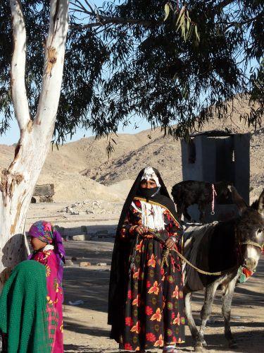 Zdjęcia: Okolice Port Safaga, Afryka, W oazie, EGIPT