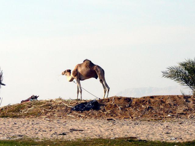 Zdjęcia: Luksor, Afryka, Wzdłuż Nilu 6, EGIPT