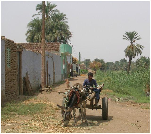 Zdjęcia: Asuan -wysepka na Nilu, Woźnica, EGIPT