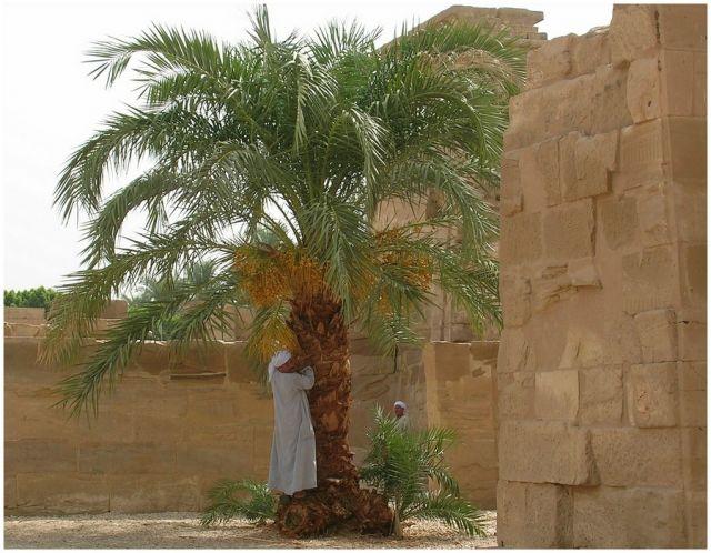 Zdjęcia: Medinat Habu, Egipt środkowy, Pod palmą, EGIPT