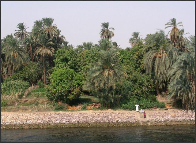 Zdjęcia: Nil, Egipt część południowa, Na brzegu wielkiej rzeki, EGIPT
