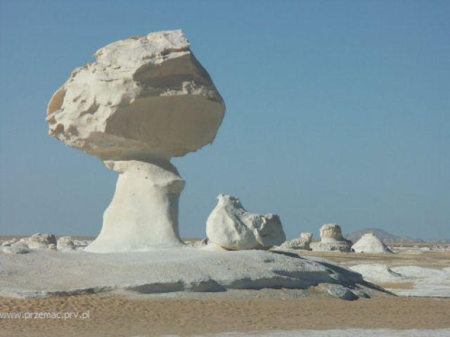 Zdjęcia: Biała Pustynia, Kurczak i drzewo, EGIPT