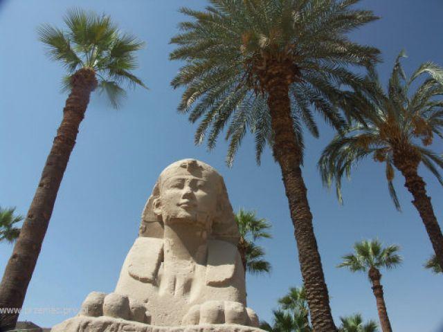 Zdjęcia: Luksor, Sfinks pod palmami, EGIPT