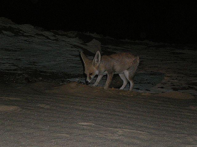 Zdjęcia: Obóz w nocy, Pustynia Biała Wschodnia, Fenek, EGIPT