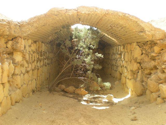 Zdjęcia: okolice depresji Qattara, Pustynia El Alamain, Drzewo w bunkrze, EGIPT