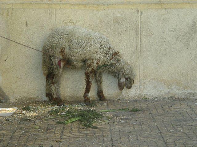 Zdjęcia: ulica, Aleksandria, W oczekiwaniu na Ramadan, EGIPT