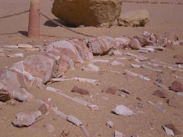 Zdjęcia: Dolina Wielorybów, Wadi El Hitan, Basilosaurus, EGIPT