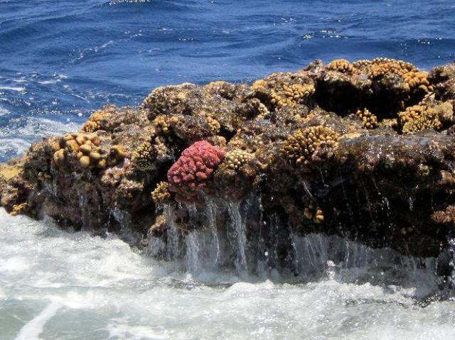 Zdjęcia: Sharm el Sheik, -Synaj, Rafa koralowa, EGIPT