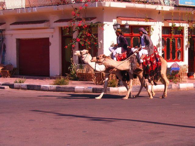 Zdjęcia: Nuwejba, Półwysep Synaj, jeźdźcy, EGIPT