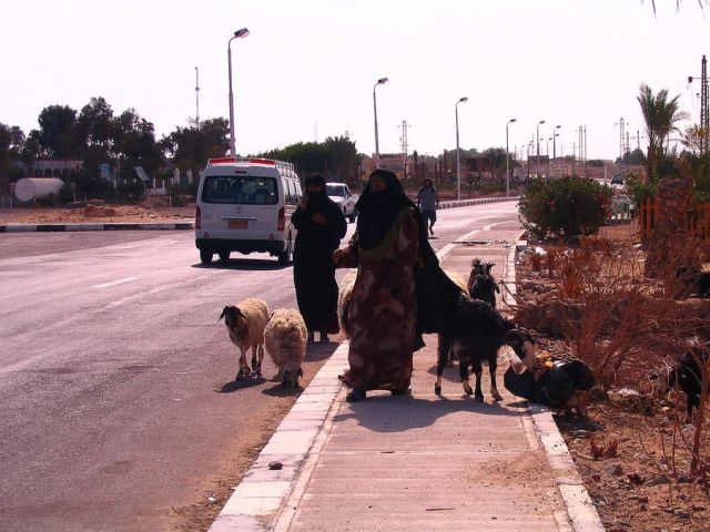 Zdjęcia: Nuwejba, Półwysep Synaj, pasterki..., EGIPT