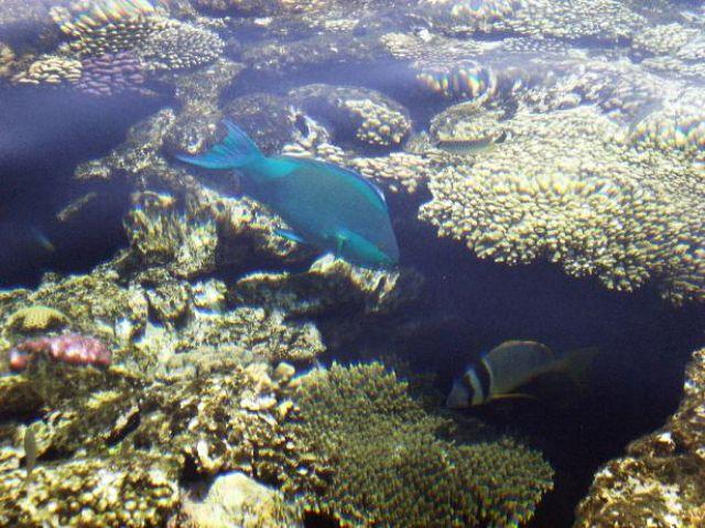 Zdjęcia: Sharm el Sheik, Synaj , Podwodny świat, EGIPT