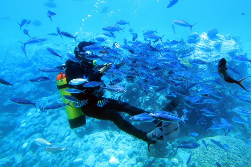 Zdjęcia: gdzieś w głębinie ;-), Hurgada, karmienie rybek, EGIPT