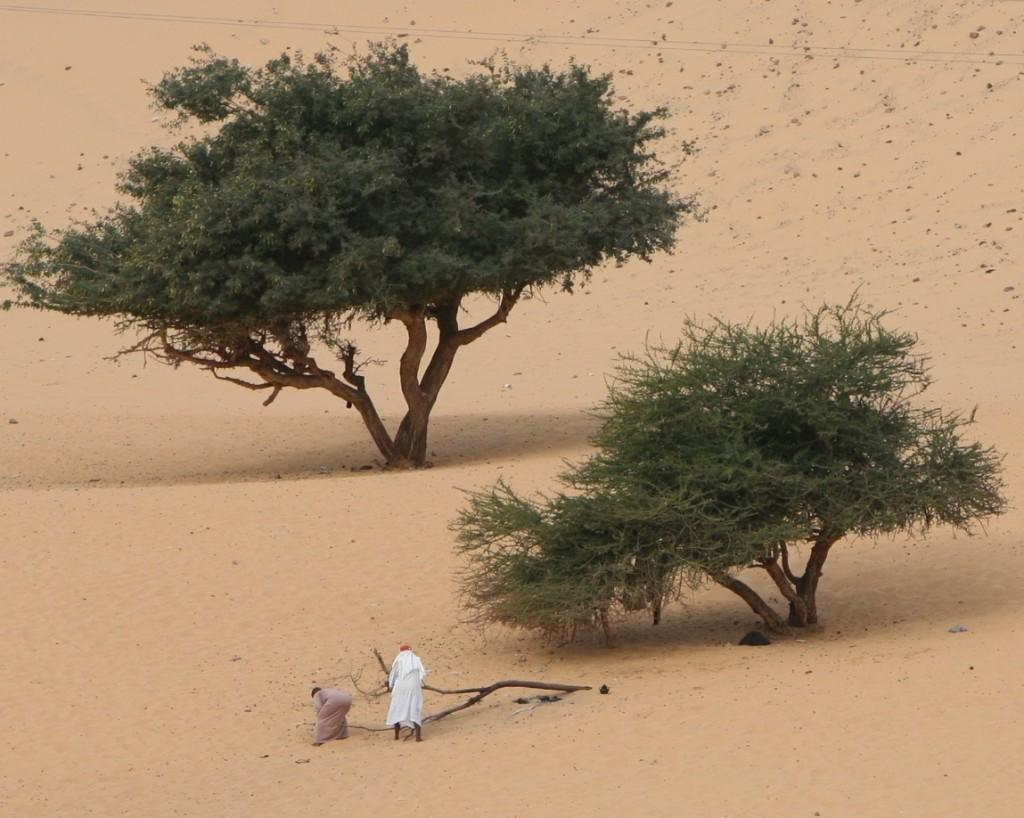 Zdjęcia: Nad Nilem, Asuan, Zbieracze drewna, EGIPT