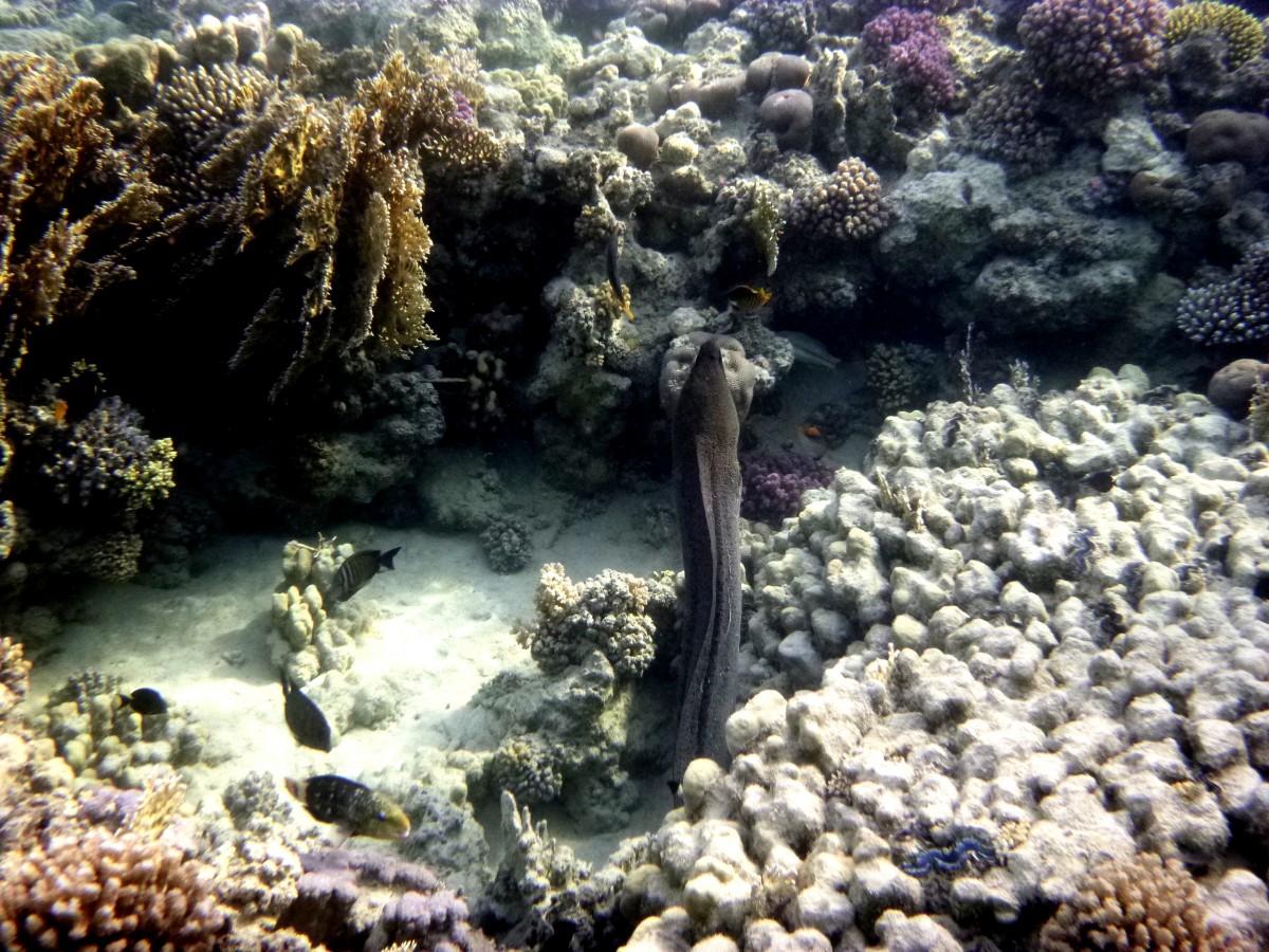Zdjęcia: rafa, Marsa Alam, Podwodny świat, EGIPT