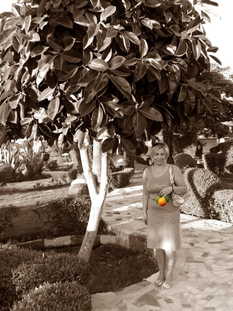 Zdjęcia: Hurghada, Egzotyczne ogrody, EGIPT