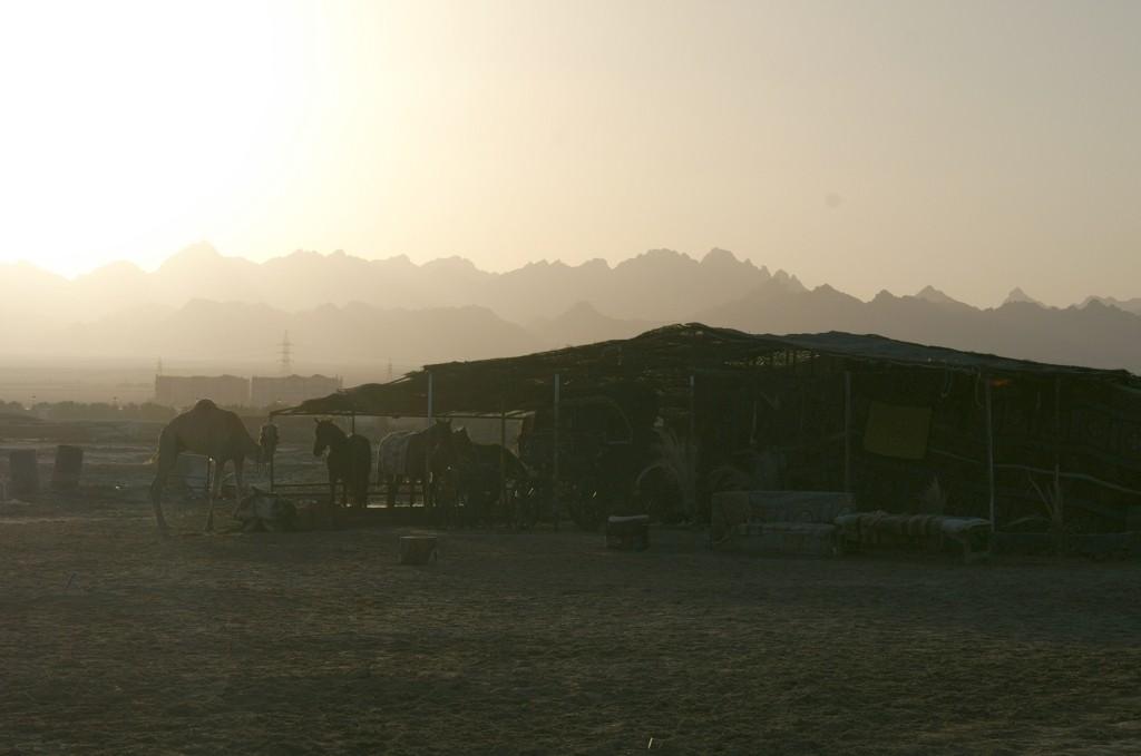 Zdjęcia: Hurghada, wybrzeże morza Czerwonego, plaża o zachodzie słońca, EGIPT