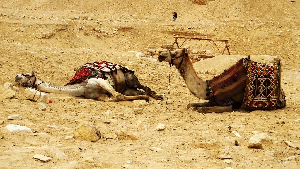 Zdjęcia: Giza, Nekropolia Memficka, odpoczynek, EGIPT