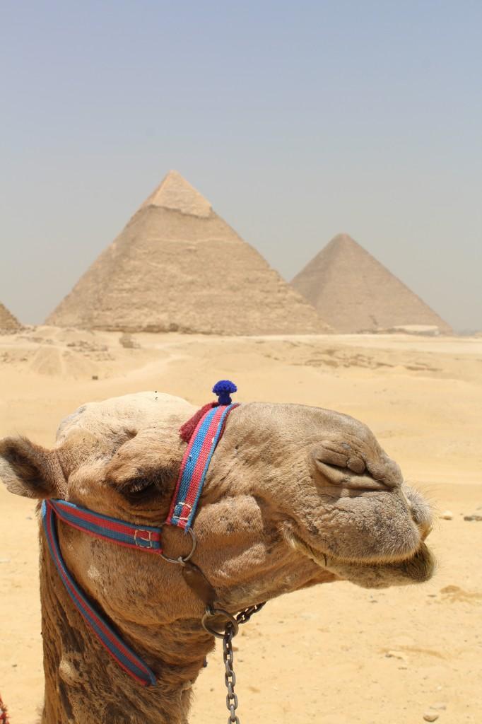 Zdjęcia: Egipt, Egipt, Egipt, EGIPT