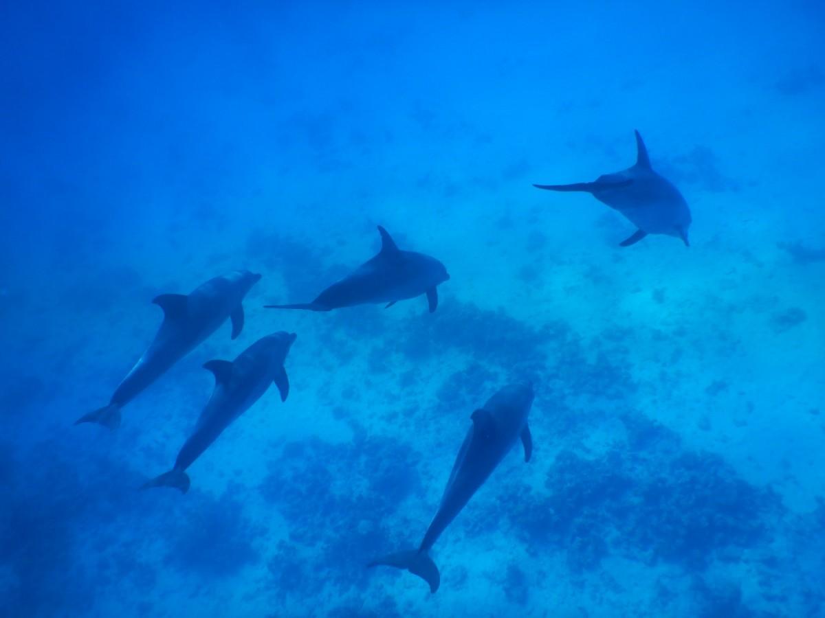 Zdjęcia: Hurghada, Morze Czerwone, Delfiny w Hurghadzie, EGIPT