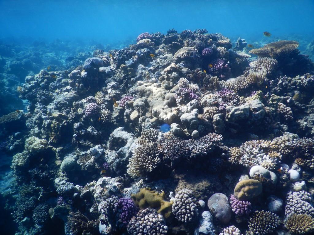 Zdjęcia: Hurghada, Red Sea, Fanadir - rafa koralowa, EGIPT