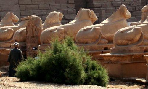Zdjecie EGIPT / - / Egipt / Egipt