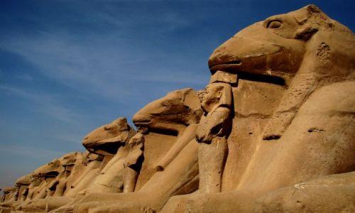 Zdjęcie EGIPT / - / Egipt / Luksor