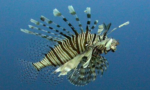 Zdjecie EGIPT / Hurghada / okolice Hurghady / rybki....
