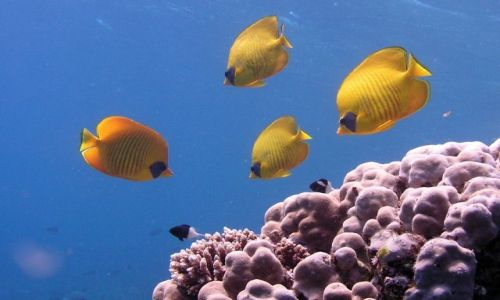 EGIPT / Hurghada / okolice Hurghady / rybki....