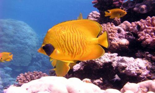 Zdjecie EGIPT / Hurghada / okolice Hurghady / rybki...