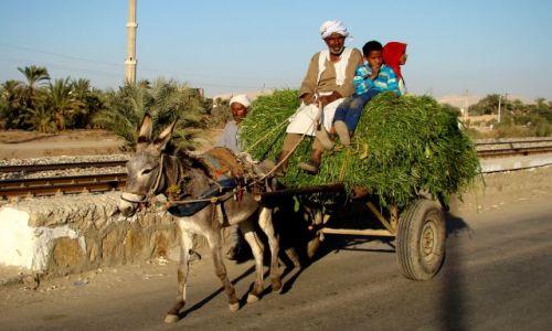 Zdjęcie EGIPT / - / Asuan / Rodzinka