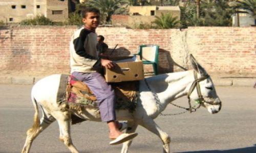 EGIPT / brak / Kair / transport w Egipcie