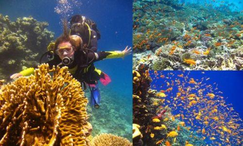 Zdjecie EGIPT / Hurghada / Morze Czerwone / Nurkowanie