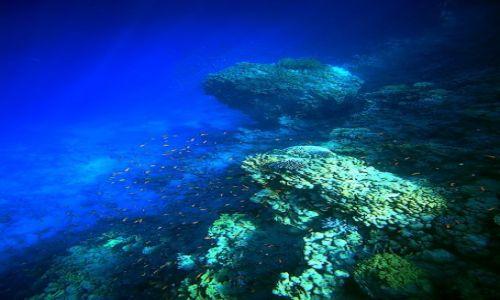 Zdjęcie EGIPT / Sharm El Sheikh / Ras Um El Sid / The Big Blue
