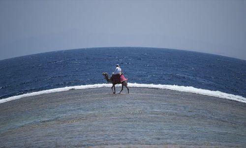 Zdjecie EGIPT / Sharm / ... / ...spacer...