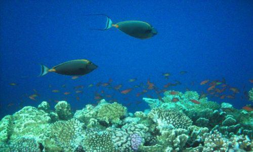 Zdjecie EGIPT / Sharm / Nabi Bay / Podwodny świat.